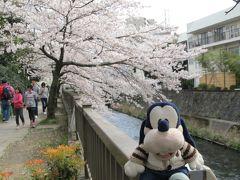 グーちゃん、春の花見合宿に行く!(伊東公園でお花見編!)