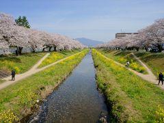 豊川市桜まつり