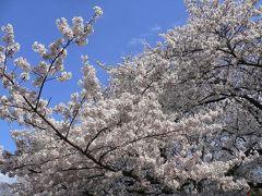 池袋から上野恩賜公園、そして浅草へ リベンジの東京スカイツリー