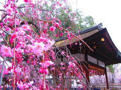 近所の平野神社
