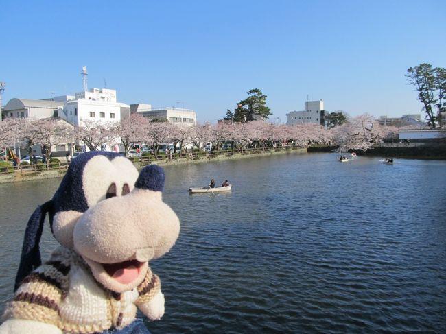 グーちゃん、春の花見合宿に行く!(小田原城でリベンジ編)