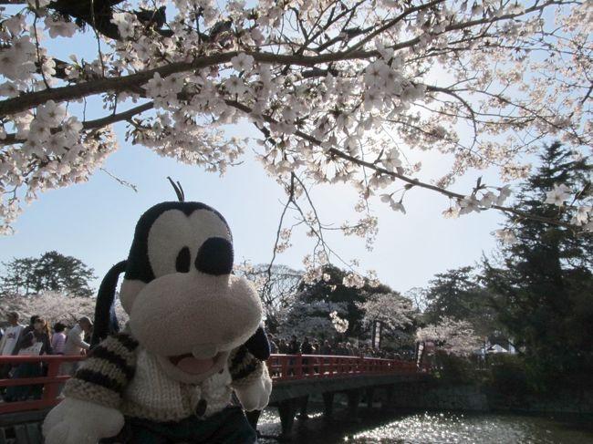 グーちゃん、春の花見合宿に行く!(小田原城で二次会、三次会編)