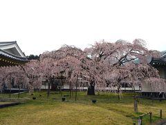 京都さくら紀行2012 (一日目前半) 醍醐寺、随心院、勧修寺