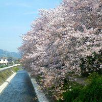 葉桜の季節に/無名の名所を歩く