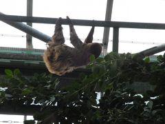 2011.11.23千葉市動物公園へたまちんに会いに行く。②