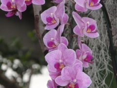 「美しい花と夕日を撮る」土肥温泉1泊2日の旅≪デジブック交友旅行≫に参加