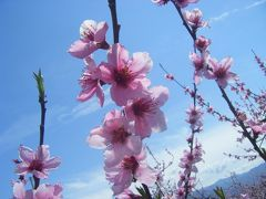お花見(桃と菜の花)