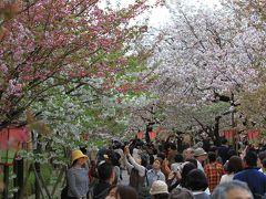 【大阪桜2012】 大阪の春の風物詩 桜の通り抜け始まる 「造幣局」