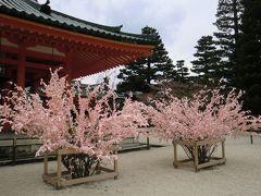 観桜の京都旅 3日で一生分の桜を観尽くした !? 1