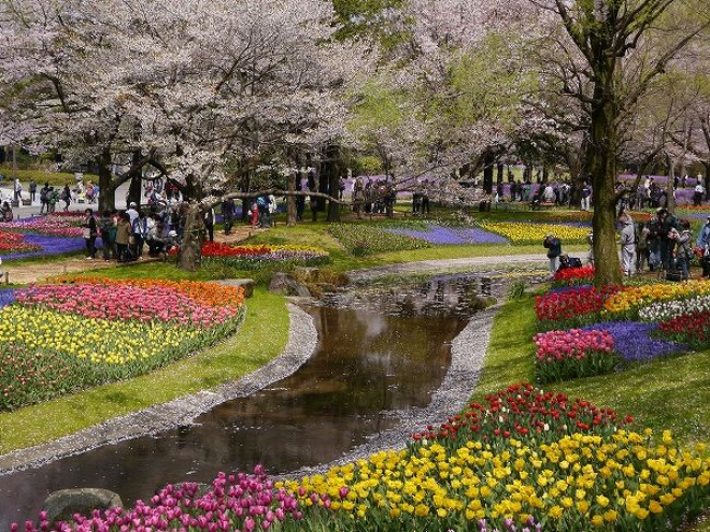 春になるとあちこちからお誘いが増えます。<br />そんな中でも昭和記念公園ファン倶楽部のオフ会は最優先。<br />皆さん心待ちにしてますからね。<br /><br />ところがオフ会予定日は一日雨で順延。<br />うーん、困った。翌日は別オフの予定が!<br />結局、別オフは飲み会だけの参加にして、順延になった昭和記念公園にGO!!<br /><br />今年は花が遅れてますが、チューリップも桜も菜の花もちょうど見頃でした。<br />チューリップから始めて、桜の花びらの舞い散る中でピクニックランチ。<br />さらに、こもれびの丘で宝探しして子供の森にご案内というコース。<br /><br />参加された皆さん、お疲れ様でした。<br />公園の春満喫のオフ会になりましたね。<br /><br /><br />