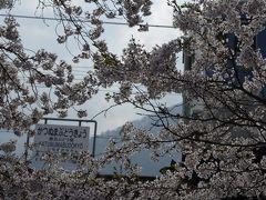 桜満開の駅で撮り鉄