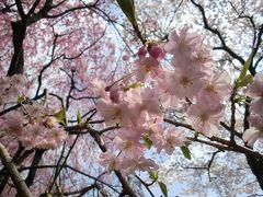観桜の京都旅 3日で一生分の桜を観尽くした !? 2
