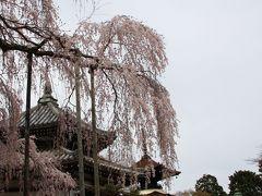 山寺をめぐり竹林をぬけながら見る桜の競演~大原野コース~