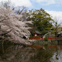 桜を見に行ってきました。と言ってもメインは桜エビだったり。