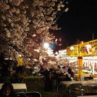北越谷元荒川堤で夜桜観賞