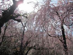 2012年4月の京都 桜三昧後半 嵐山~山科~平安神宮