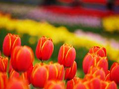 Tulip Garden Museum 2012