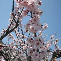 春の長野県家族旅行part1『あんずの里リベンジの巻』