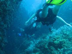 ジンベエ!?タオ島でダイビング三昧、タイのタオ島その3