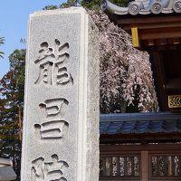 那珂市 龍昌院の枝垂れ桜