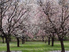 結城市 日本花の会 結城農場の風景