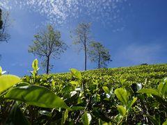 20120211 ヌワラエリヤ ラブケリーで茶畑見学