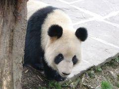 中国の旅、チベットを求めて その4-碧峰峡パンダ研究センター
