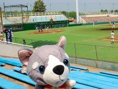 【はすゑと旅する】等々力で社会人野球と関取を見たワン!