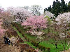 美の山(蓑山)☆ 奥秩父の春爛漫
