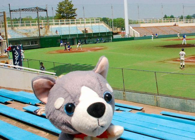 新丸子の駅から、等々力球場でクラブチームの熱い戦いを見ました。<br />都市対抗野球の神奈川一次予選で、横浜ベイブルースと京浜野球倶楽部の試合でした。<br /><br />隣の等々力スタジアムでは、川崎フロンターレさんの試合をやっていたようで、<br />大相撲の春日山部屋の力士がいっぱいいるイベントをやっていました!<br /><br />4トラベルでは、野球成分を少なめにして、旅行記風にまとめます。<br /><br />野球ブログは、こちら。<br /><br />【都市対抗神奈川一次予選】横浜ベイブルース 初戦突破<br />http://www.plus-blog.sportsnavi.com/chifu/article/588<br /><br />横浜ベイ○○ー○対千葉ロッテ風<br />http://www.plus-blog.sportsnavi.com/chifu/article/587<br /><br />