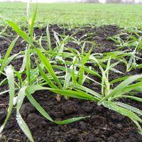 新種小麦「ゆめちから」を求めて その2 白糠・本別・池田編