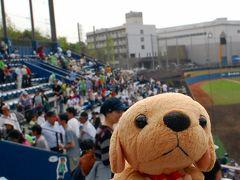 がんばれファイターズ!鎌ヶ谷で熊を見たよ。