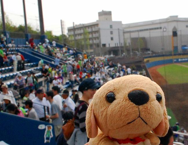 ファイターズタウン鎌ヶ谷。<br />久しぶりの鎌ヶ谷での野球観戦です。<br />横浜から六本木・茅場町・船橋・西船橋を経て、東武野田線の鎌ヶ谷駅へ。<br />そこから、バスで球場に向かいました!<br /><br />GWの序盤の日曜日、多くの人で賑わいました。<br />試合は、鎌ヶ谷0−1利府 で、負けてしまいました。<br />負け投手、糸数でしたが、勝ち投手にしてあげたい感じでしたね。<br /><br />