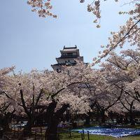 がんばろう!福島。2012年GWは桜が満開(((o(*゚▽゚*)o)))鶴ヶ城、南湖公園、塔のへつり