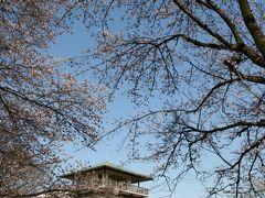 生田緑地・升形山展望台で桜見物&散策