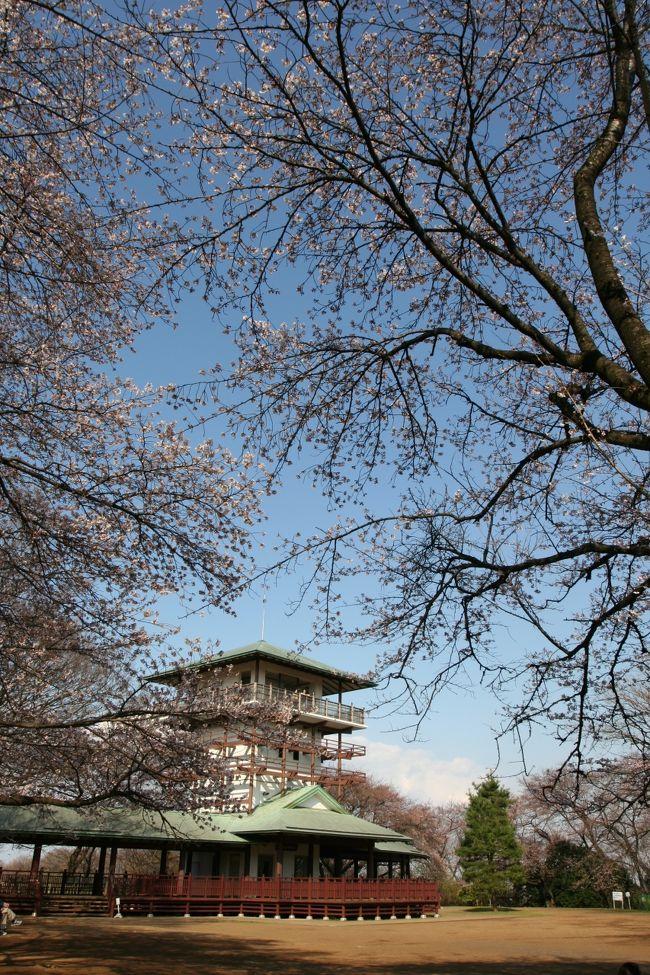 川崎の日本民家園のそばには升形山展望台という素晴らしい桜の名所があります。これまでその存在は知っていましたが、訪れたことは一度もありませんでした。民家園にはもう何度も訪れていますが、これまで足が向きませんでした。そこで4月のある日ふと思い立って、民家園を訪ねたついでに、立ち寄ってみました。<br /><br />升形山は山というよりは丘といった感じで、ここは標高84メートル程度です。ただきつい階段を延々と登らなければならず、頂上まで行くには少々疲れます。しかし、360度を見渡すことが出来る展望台に上ると、はるか遠くに東京スカイツリ―や都心のビル群さらには富士山まで見ることが出来て、爽快な気分になること請け合いです。