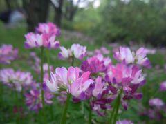れんげ畑でつかまえて♪  昭和記念公園ピクニック・オフ会
