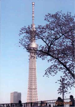 東京の浅草・隅田川の桜・スカイツリー・2012年