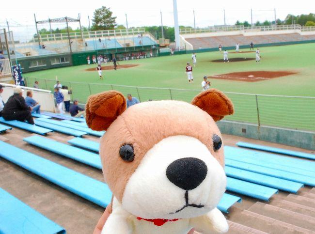 中1日を挟んで、社会人野球・都市対抗野球神奈川一次予選を見るために、<br />川崎市の等々力球場に行ってきました。<br />この日は、茅ヶ崎サザンカイツVS横浜金港クラブの試合が目的です。<br /><br />野球ブログは、こちら。<br /> ↓<br />【都市対抗神奈川一次予選】茅ヶ崎サザンカイツ 2回戦で惜しくも敗れる<br />http://www.plus-blog.sportsnavi.com/chifu/article/590<br /><br />茅ヶ崎サザンカイツVS金港クラブ(続編)<br />http://www.plus-blog.sportsnavi.com/chifu/article/591<br /><br />これで、ゴールデンウィーク前半が終了・・・。<br /><br /><br />
