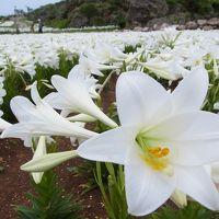 2012年4月はるのきとねいちへ行く。②伊江島~ゆり祭りへ