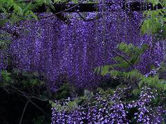 2012・春 岡山の旅 ◆ 4日目 備前 和気の藤公園と旧閑谷学校
