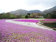本栖湖周辺さんぽ①富士芝桜まつり