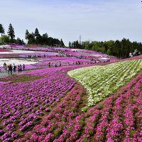 埼玉県は秩父にある秩父羊山公園の40万株の芝桜の丘