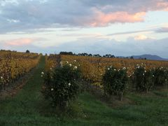2012 訪れる秋の一瞬の輝きを味わう 黄葉を楽しむタスマニアとメルボルン&シドニー (4)