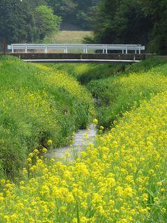 佐倉市散策(28)・・佐倉西部を流れる手繰川を訪ねます。