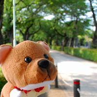 【柴右衛門と旅する】六本木〜乃木坂〜神宮球場で久古の応援だワン!