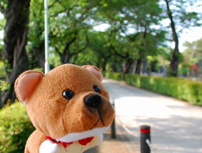 神宮球場で、東京ヤクルトの久古健太郎投手の応援へ。<br />いつもは、恵比寿まで行って、代々木経由で信濃町まで行くのですが、<br />天気の良い土曜日だったので、六本木から神宮球場まで歩いてみました。<br />歩いていっても、そんなに遠くありません。<br />柴次朗の祖父、柴三朗が眠る青山霊園を通って、行きました。<br /><br />東京ヤクルトの久古健太郎投手とは・・・<br />5月17日の様子。<br />http://www.plus-blog.sportsnavi.com/chifu/article/598<br />http://www.plus-blog.sportsnavi.com/chifu/article/597