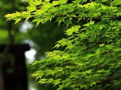 京都 新緑の嵯峨野路
