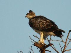 【弾丸】2泊5日で南アフリカ vol.2  Twitterを頼りに動物を探す!クルーガー国立公園で近代的な?サファリを体験