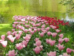 オランダの旅(3)・・世界で最も美しい花の楽園キューケンホフ庭園を訪ねて